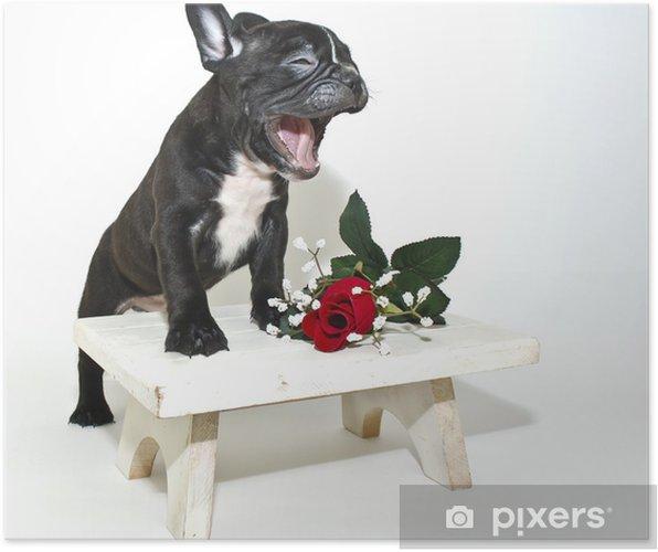 Poster Lustig französisch Bulldogge • Pixers® - Wir leben, um zu ...
