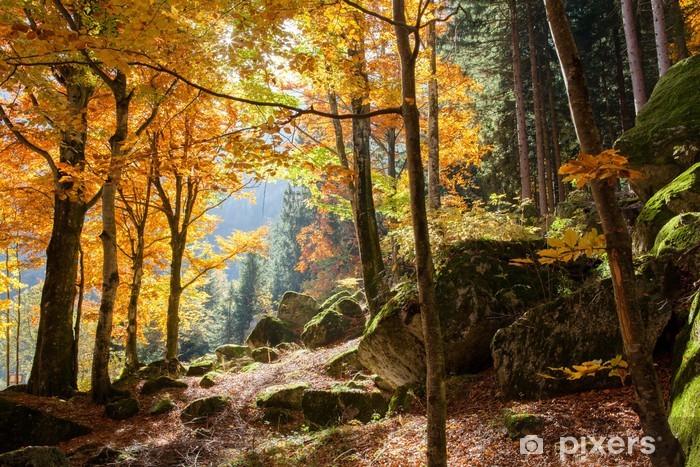 Vinil Duvar Resmi Autunno Foresta -