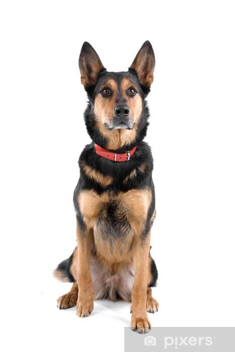 Fotomural Vista frontal de un hermoso cachorro de pastor alemán ...