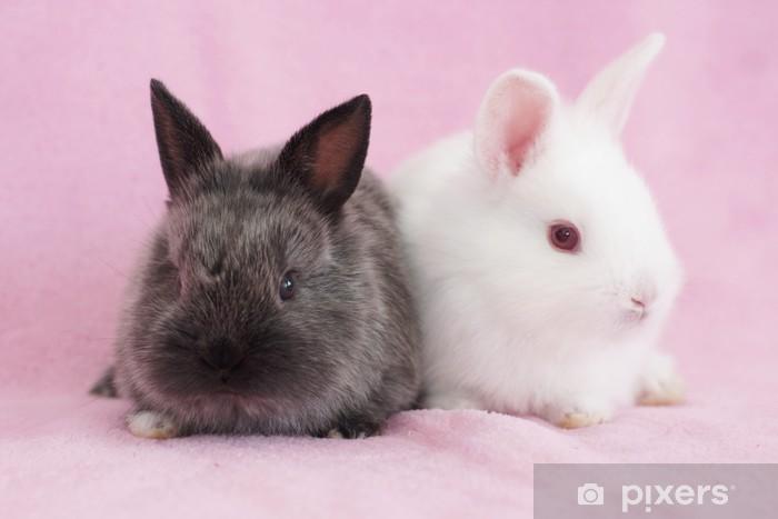 Fototapete Baby Hasen • Pixers® - Wir leben, um zu verändern 41284c2dbd
