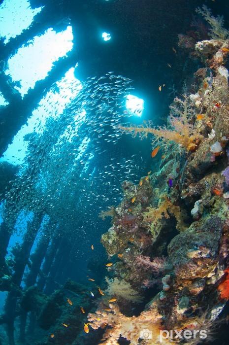 Vinyl-Fototapete Weichkorallen und Glasfischen in einem großen Schiffbruch - Wassersport