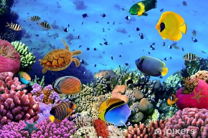Billede af en koral koloni Vinyl fototapet -
