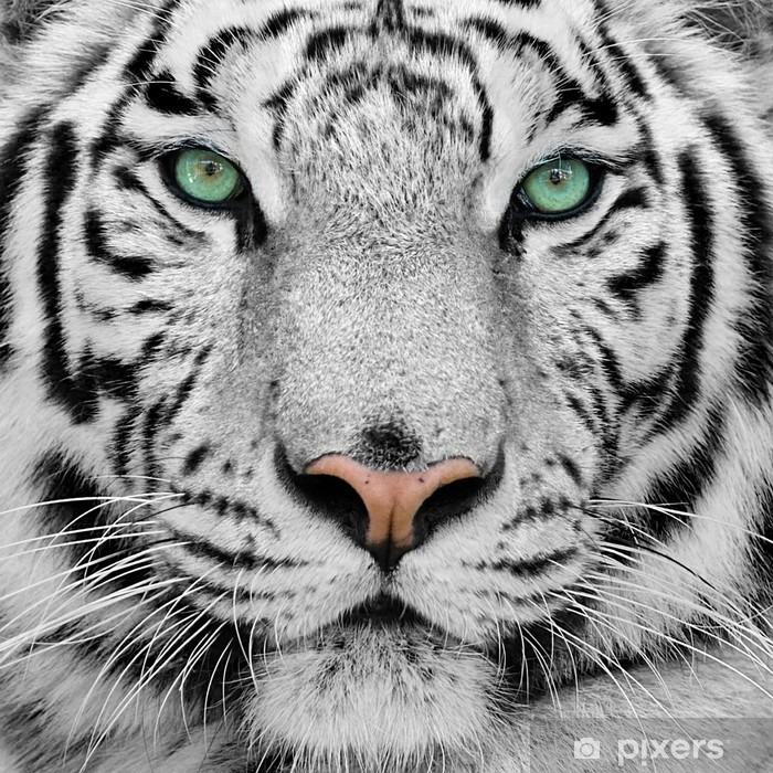 Fototapet av Vinyl Vit tiger -