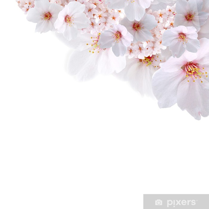 Vinylová fototapeta 春 向 け 桜 斜 め 配置 - Vinylová fototapeta