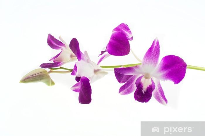 Vinylová fototapeta Fialová orchidej na bílém pozadí - Vinylová fototapeta