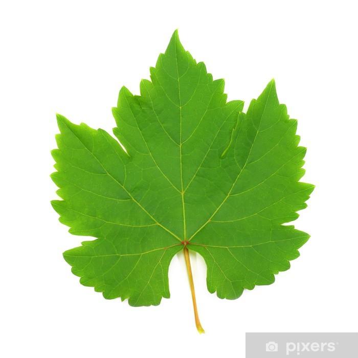 Vinylová fototapeta Fresh Green Grape Leaf na bílém pozadí - Vinylová fototapeta