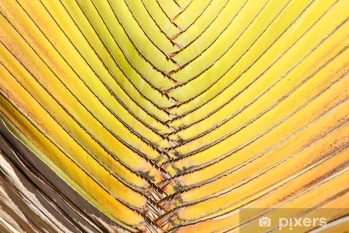 Vinylová fototapeta Palmový list na pozadí obrazu. - Vinylová fototapeta