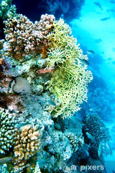 Vinylová fototapeta Skupina korálových ryb vody. - Vinylová fototapeta