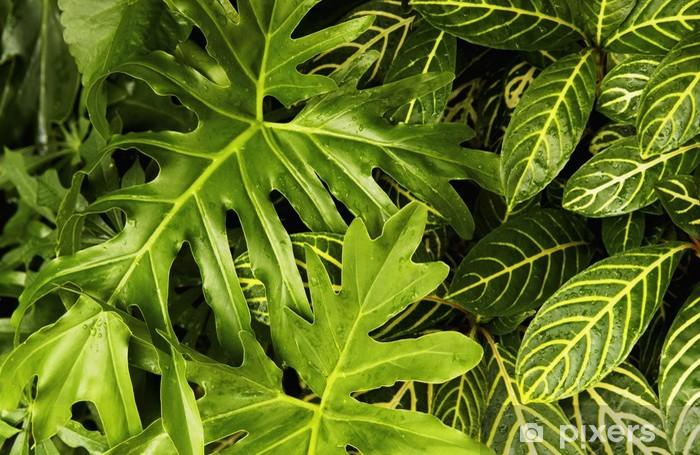 Vinylová fototapeta Tropické rostliny vzor - Vinylová fototapeta