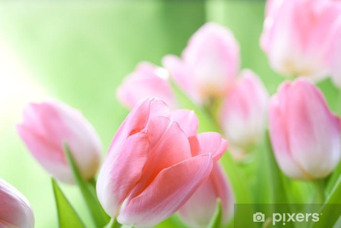 Vinylová fototapeta Tulipány květiny - Vinylová fototapeta