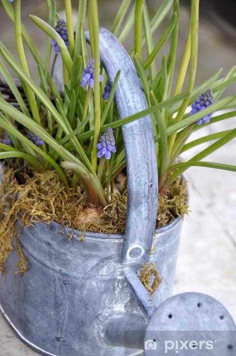 Vinylová fototapeta Výzdobě Exteriér, fleurs de Muscaris - Vinylová fototapeta