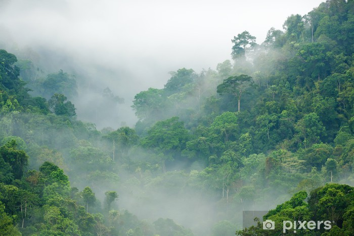Kendinden Yapışkanlı Duvar Resmi Rainforest sabah sis -