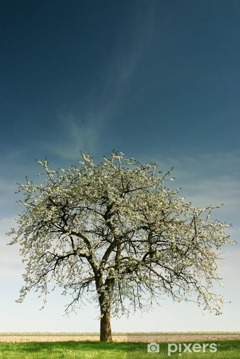 Naklejka Pixerstick Jedno drzewo jabłoni - Drzewa
