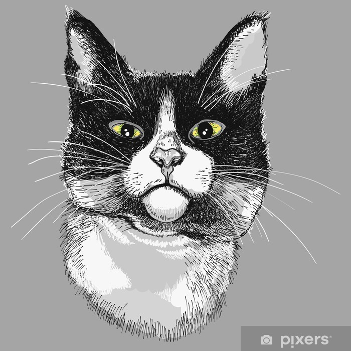 Naklejka Portret Czarno Biały Kot Ilustracja Pixers żyjemy By