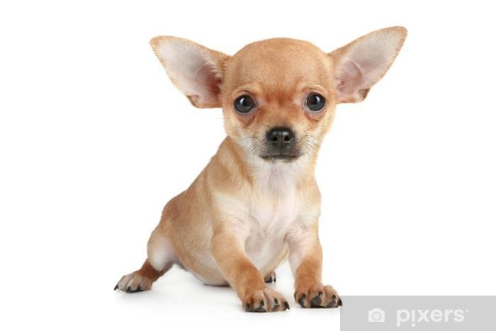 f66b4d07716 Nálepka na stolek Lack Funny štěně čivava • Pixers® • Žijeme pro změnu