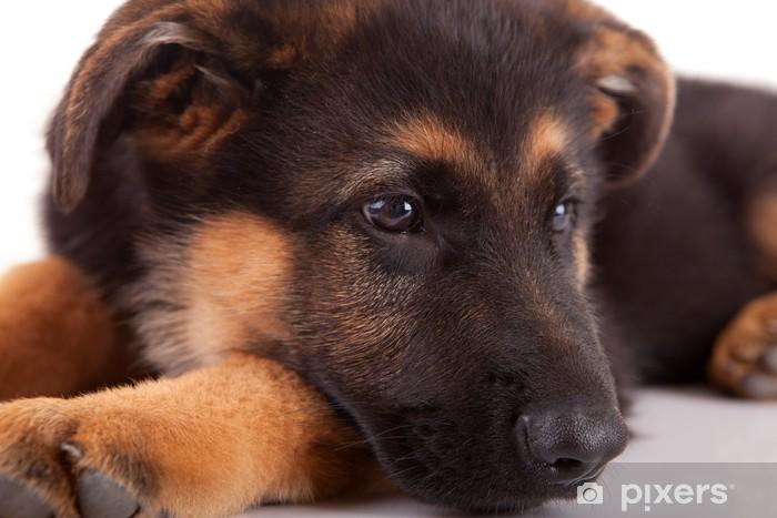 Chien Peint papier peint berger allemand chien • pixers® - nous vivons pour changer
