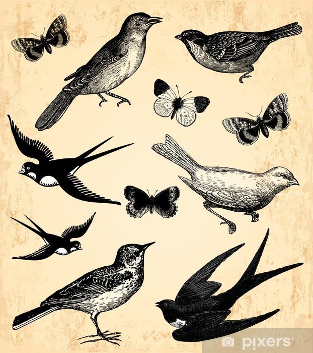 Papier Peint Oiseaux Et Papillons Pixers Nous Vivons Pour Changer