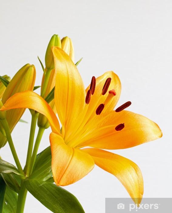 Papier Peint Orange Vif Fleur De Lys Pixers Nous Vivons Pour