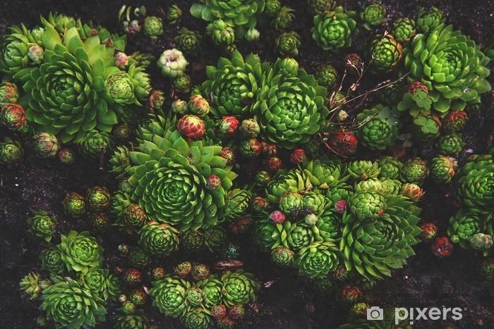 Papier Peint Plante Succulente Fond Naturel Dans Des Couleurs