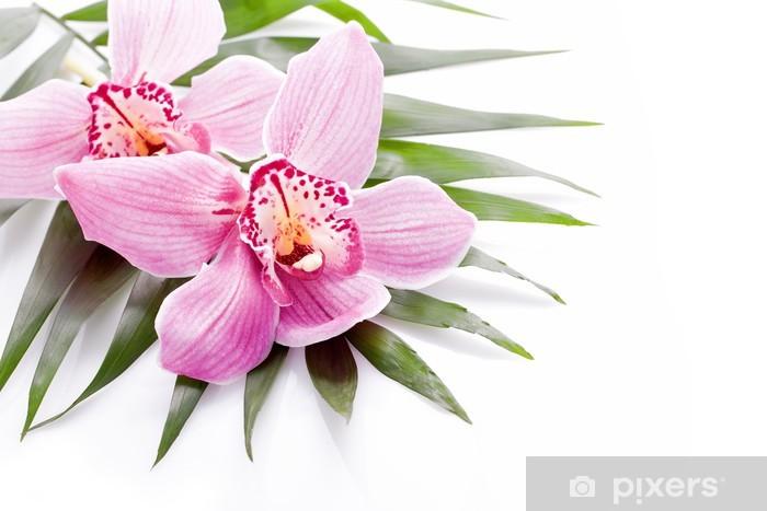 Papier Peint Tropical Rose Orchidee Fleur De La Plante Sur La