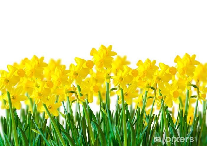 Vinilo Pixerstick Una Hilera De Narcisos Amarillos Pixers - Narcisos-amarillos
