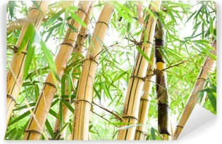 Abwaschbare Fototapete Bamboo forest