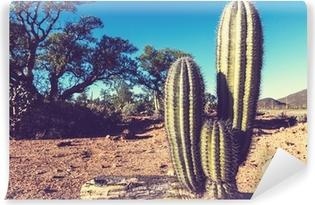 Abwaschbare Fototapete Kaktus in Mexiko
