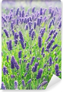 Abwaschbare Fototapete Lavender Flowers Blooming in einem Feld