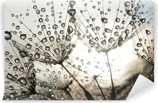 Abwaschbare Fototapete Löwenzahn Samen mit Tautropfen