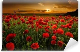 Abwaschbare Fototapete Mohnfeld bei Sonnenuntergang