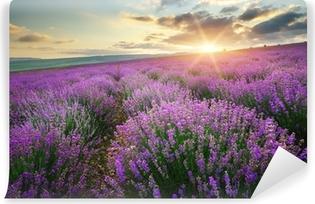 Abwaschbare Fototapete Morgen auf einer Lavendelwiese