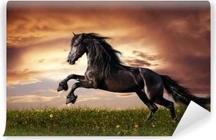 Abwaschbare Fototapete Schwarzes Friesenpferd im Galopp
