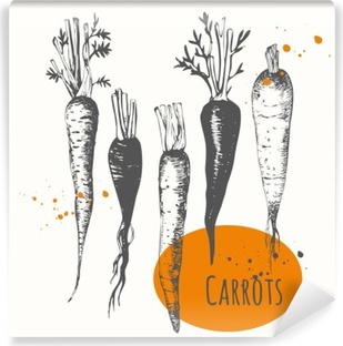 Abwaschbare Fototapete Set von Hand gezeichnet Karotten. Schwarz-Weiß-Skizze Essen.