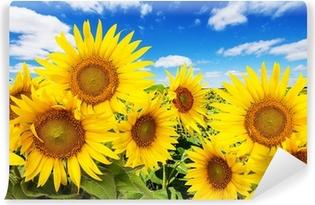 Abwaschbare Fototapete Sonnenblumenfeld und blauer Himmel mit Wolken