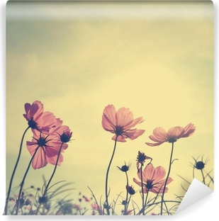 Abwaschbare Fototapete Weinlese-Blumen Cosmos in Sonnenuntergang