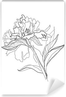 pfingstrose zeichnen blumen zeichnung, poster zeichnen pfingstrose • pixers® - wir leben, um zu verändern, Design ideen