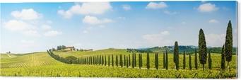 Beautiful landscape with vineyard, Chianti, Tuscany, Italy Acrylic Print