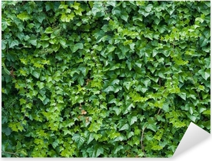 Adesivo Pixerstick Arrampicata sfondo edera.