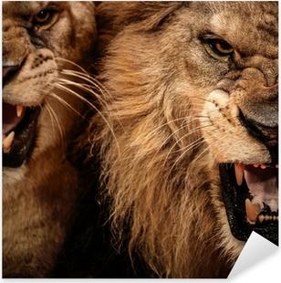 Adesivo Pixerstick Close-up colpo di due leone ruggente