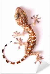 Adesivo Pixerstick Gecko arrampicata isolato