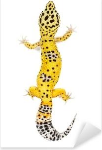 Adesivo Pixerstick Gecko del leopardo su sfondo bianco.