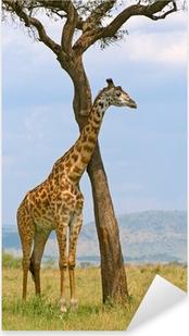 Adesivo Pixerstick Giraffa e un albero, Masai Mara, Kenya
