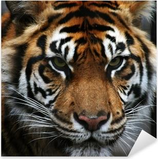 Adesivo Pixerstick Occhi di tigre