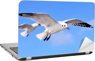 Adesivo per Laptop Gabbiani