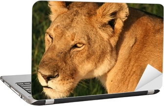 Adesivo per Laptop Lion Masai Mara in Kenya