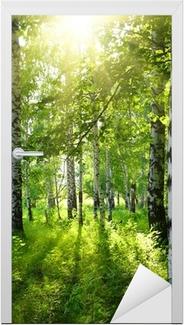 Adesivo per Porte Estate boschi di betulle con il sole