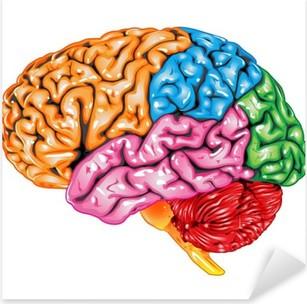 Adesivo Pixerstick Vista laterale di cervello umano