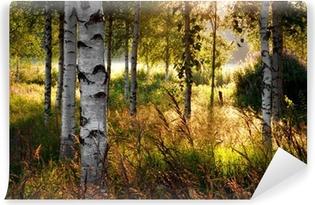 Afwasbaar Fotobehang Birch trees