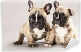 Afwasbaar Fotobehang Franse bulldogs Puppies