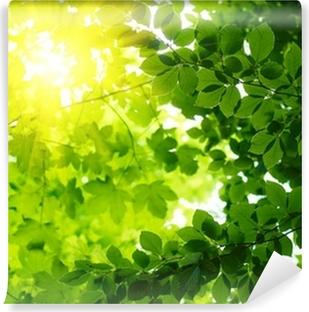 Afwasbaar Fotobehang Groene bladeren met sun ray